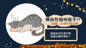 如何預防貓瘟? 貓瘟症狀的潛伏期與後續治療有哪些呢?