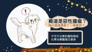 狗狗也會長惡性腫瘤!寵物得了癌症該怎麼辦?